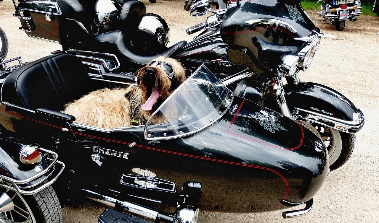 Road trip en moto aux USA avec un chien : est-ce possible ?