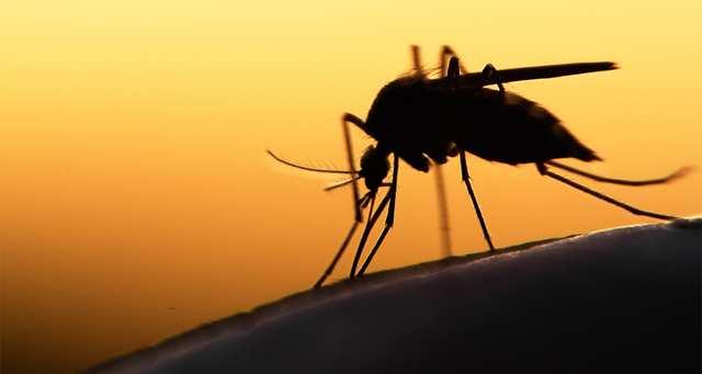 Comment se propage concrètement le paludisme ?